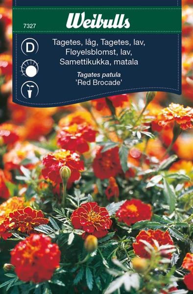 Tagetes 'Red Brocade'