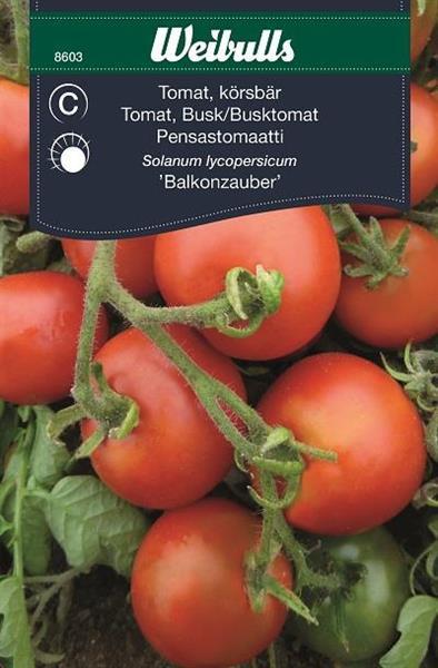 Tomat Körsbär- 'Balkonzauber'