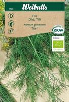 Dill 'Sari' KRAV Organic
