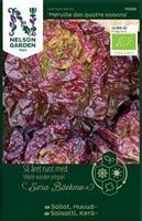 Sallat Huvud- 'Merville des quattre saison' Organic