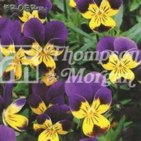 Vildblommor Heartsease