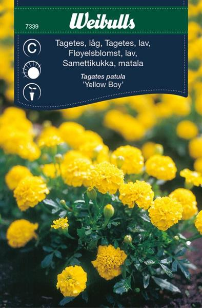 Tagetes Låg 'Yellow Boy'