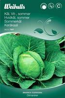 Kål Vit- 'Ditmarsker' sommar