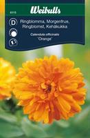 Ringblomma orange