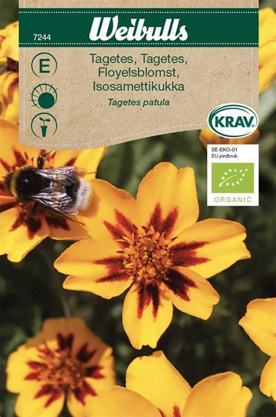 Tagetes låg KRAV Organic