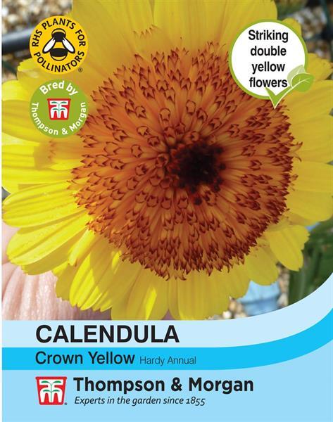 Ringblomma 'Crown Yellow'