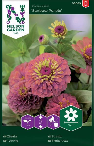 Zinnia Sunbow Purple