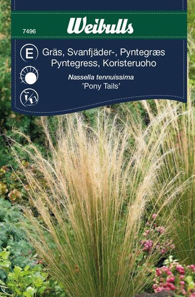 Gräs Svansfjäder- 'Pony Tails'