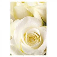 Kort Vikbara Ivory rose 25/fp