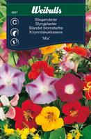 Slingerväxter mix