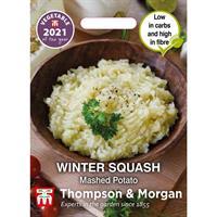 Squash Vinter- 'Mashed Potato'