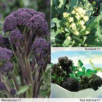 Broccoli 'All Season Mix'
