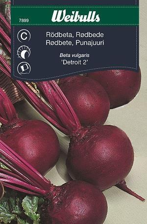Rödbeta 'Detroit 2' rund