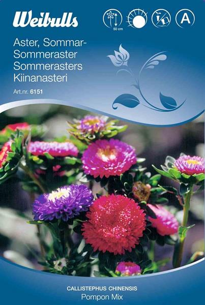 Aster Sommar- 'Pompon Mix'