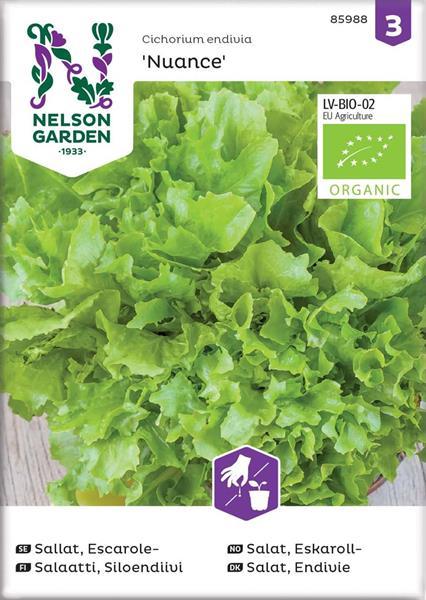 Sallat Frisée- 'Nuance' Organic