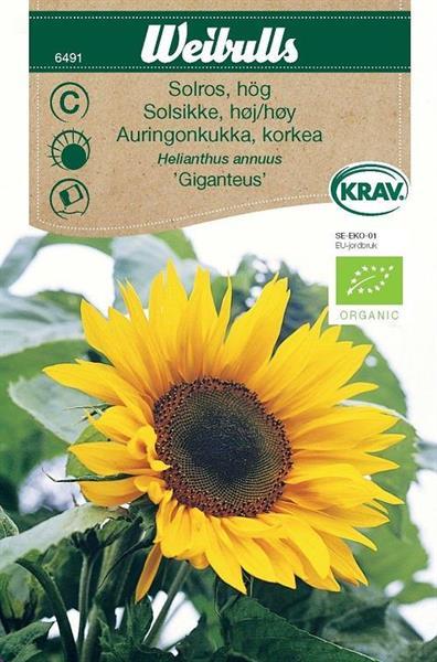 Solros 'Giganteus' hög Krav Organic