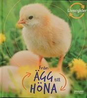 BOK - Från ägg till höna