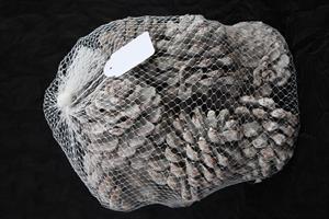 Kottar Pinea 8-10cm medium vit 12/fp