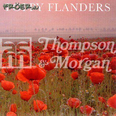 Vallmo Korn- 'Flanders'