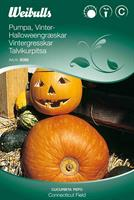 Pumpa Vinter- 'Connecticut Field' halloween-