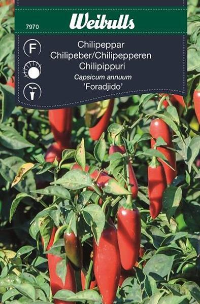 Chilipeppar 'Foradjido'