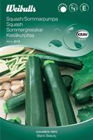 Squash Sommar- 'Black Beauty' Krav Organic