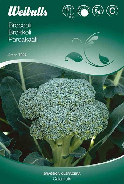 Broccoli 'Calabrese'