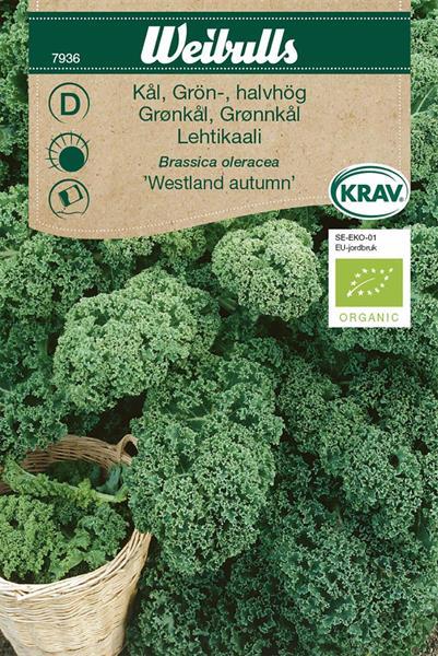 Kål Grön- 'Westland Autumn' KRAV Organic