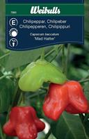 Chilipeppar 'Mad Hatter'