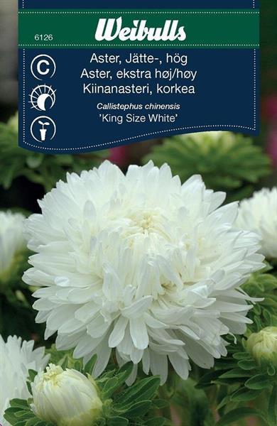Aster Jätte- hög 'King Size White'