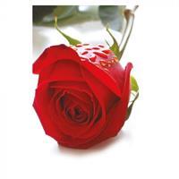 Kort Vikbara Red Rose 25/fp