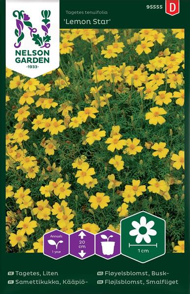 Tagetes Liten 'Lemon Star'