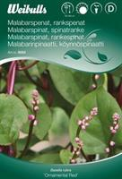 Spenat Malabar- 'Ornamental Red'