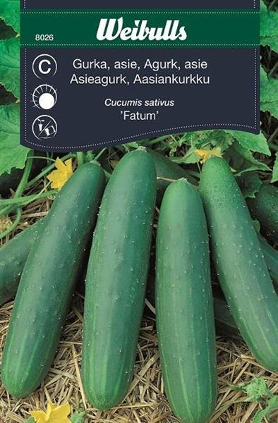 Gurka Asie- 'Fatum'