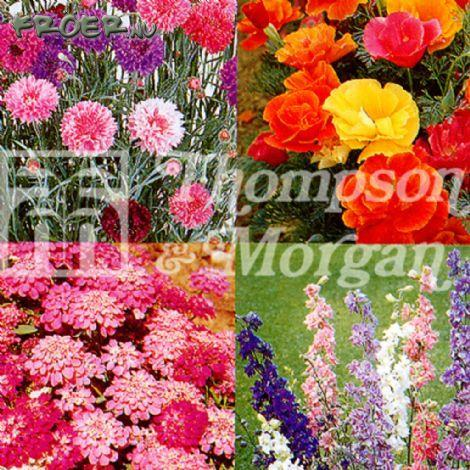 Blomsterblandning Lättodlad Ettårig