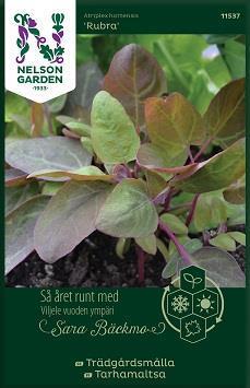 Trädgårdsmålla 'Rubra' Organic