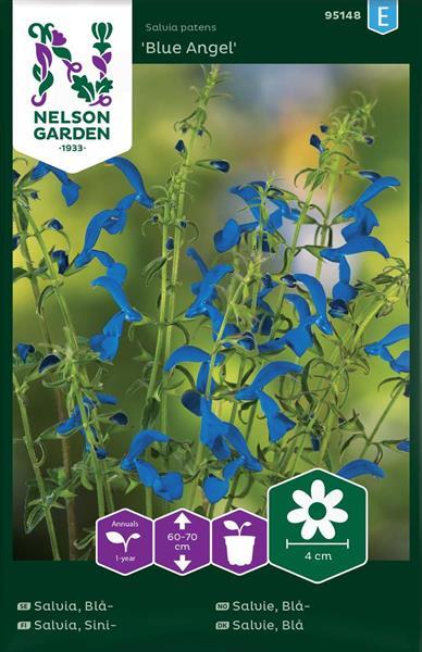 Salvia Blå-  Blue Angel