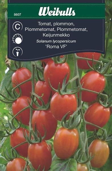 Tomat Plommon- 'Roma VF'