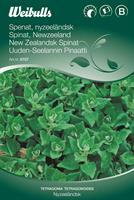 Spenat nyzeeländsk