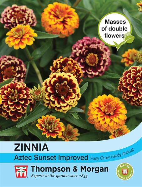 Zinnia Guld- 'Aztec Sunset Improved'