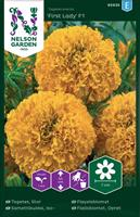 Tagetes Stor 'Inca Gold' F1