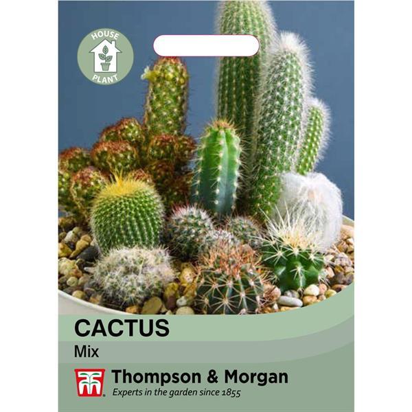 Kaktus Mix
