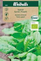 Spenat 'Vroeg Reuzenblad' KRAV Organic