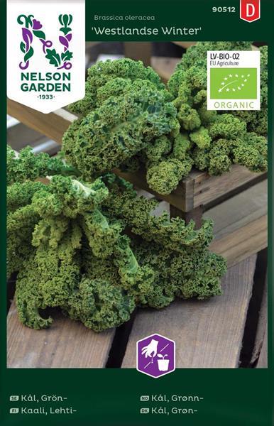 Kål Grön- 'Westlandse Winter' Organic