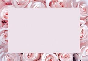 Oasis Kort rosa rosor med kant 50/fp