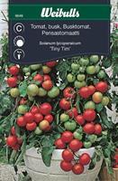 Tomat Körsbärs- 'Tiny Tim' busk