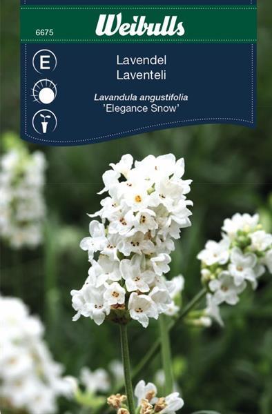 Lavendel vit