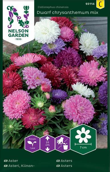Aster 'Dwarf Chrysanthemum Mix'