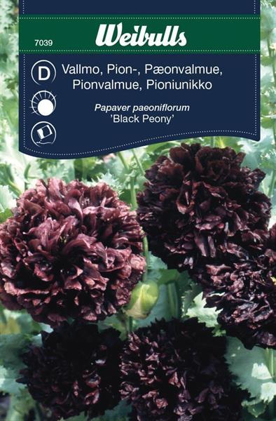 Vallmo Pion- 'Black Paeony'