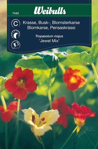 Krasse Busk- 'Jewel Mix'